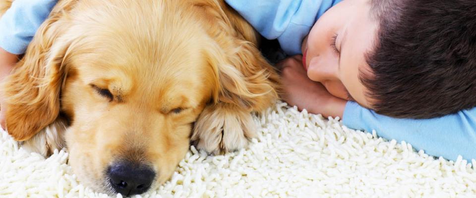 Precio limpiar alfombra tintoreria interesting consejos - Limpiar alfombras en seco ...